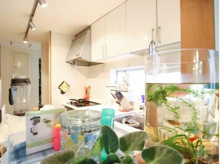 キッチン奥には大容量のパントリーや床下収納などが付いています。