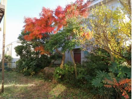 自宅のお庭で紅葉も楽しめます(12月上旬撮影)