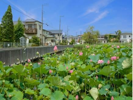桜小路公園の蓮池まで徒歩2分(約130m)