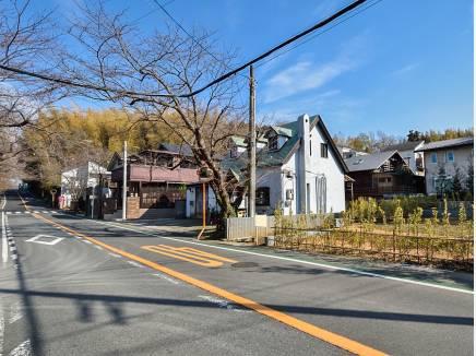 鎌倉のメインストリート桜並木通り