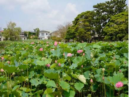 第二ハス池(桜小路公園)まで徒歩6分(約450m)