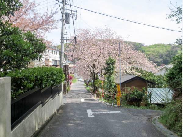 春にはこんな景色に! 季節を感じられる周辺道路