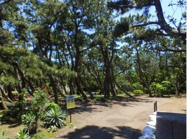 小和田浜公園まで徒歩9分(約700m)