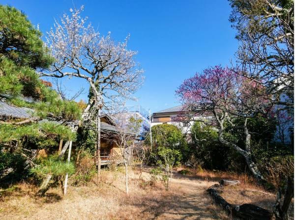 お庭の植栽で季節の彩りを感じられるでしょう