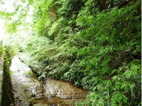 近くには二階堂川が流れます(約220m)