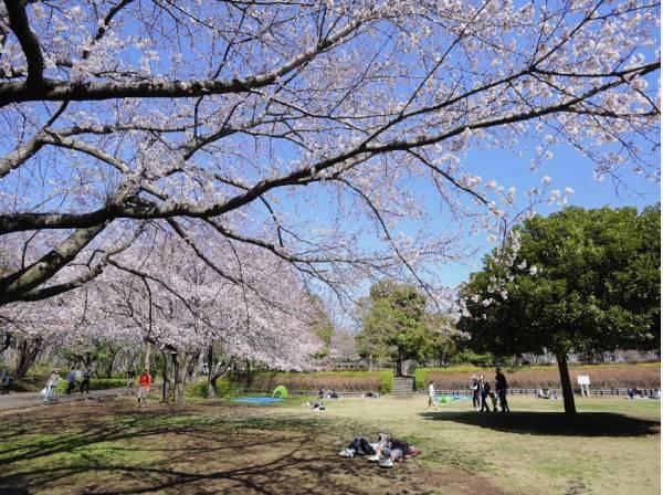 お花見スポット「大庭城址公園」東入口まで徒歩2分(約100m)